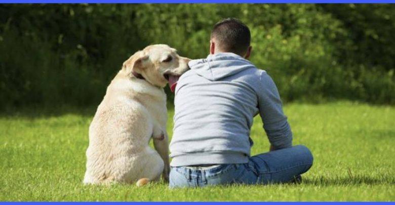 حكم تربية الكلاب في المنزل مع حكم بيع وشراء الكلاب في الإسلام